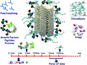 A tissue engineering approach based on the use of bioceramics for bone repair