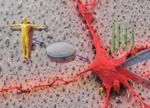 Figurative demonstration of the interface between stem cells and a person