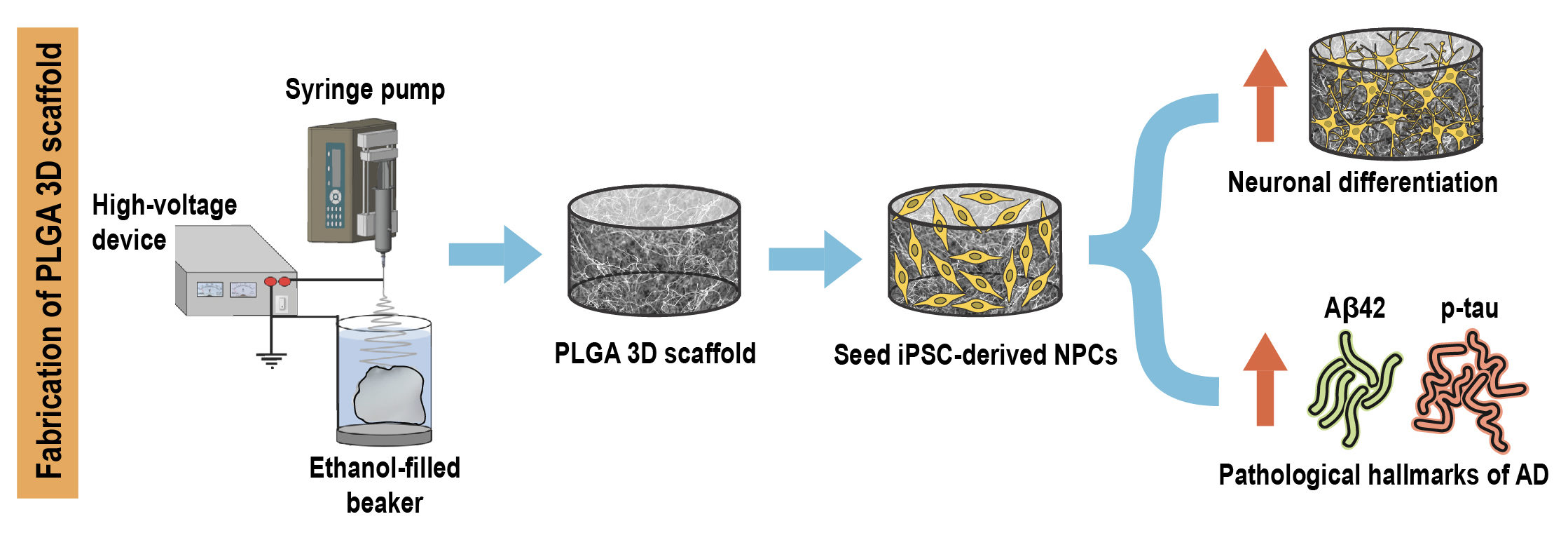 Schematic showing fabrication of PLGA 3D scaffold