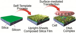 Silica sheets to deliver DNA into cells for disease prevention and treatment