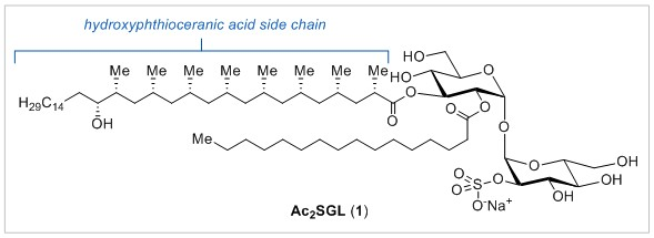 Structure of Ac2SGL with confirmed stereochemistry at C17 of the hydroxyphthioceranic acid residue