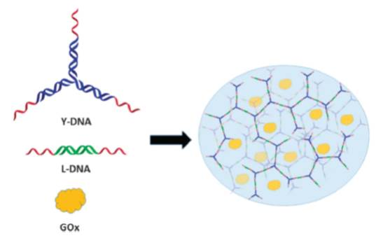 Incorporating Dna Hydrogels Into Enzymatic Biofuel Cells