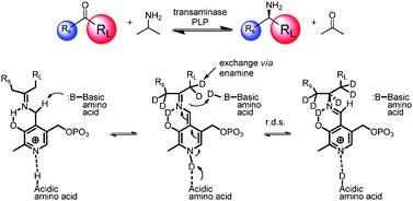 Transaminase reaction
