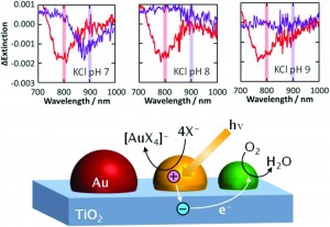 Plasmon-induced oxidation of gold nanoparticles on TiO2 in the presence of ligands