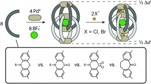 Relative anion binding affinity in a series of interpenetrated coordination cages