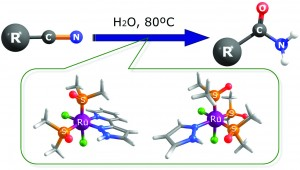 Ru(II) complexes containing dmso and pyrazolyl ligands as catalysts for nitrile hydration in environmentally friendly media