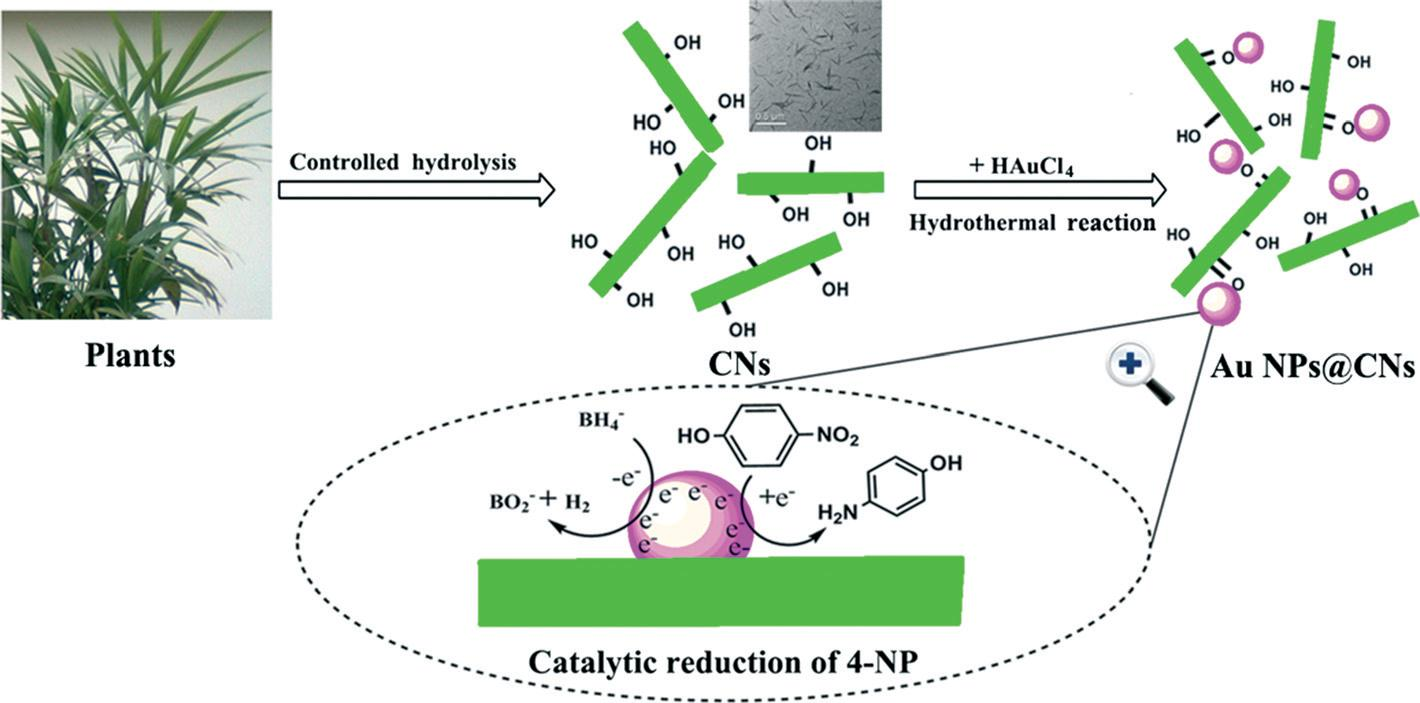 Cellulose Nanocrystals  Paving The Way To Greener
