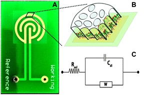 Electrochemical Sensor