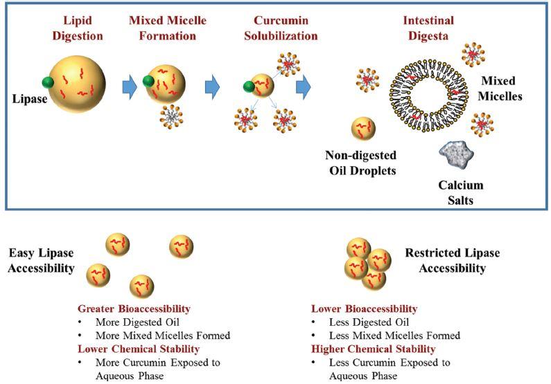 Can we improve nutraceutical bioavailability of curcumin