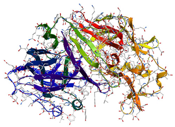 Picture of an Enzyme
