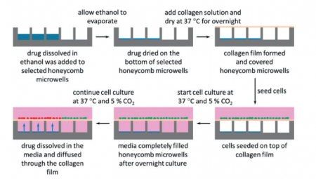 A schematic overview of how to will microwells with drug and culture hepatocytes on them