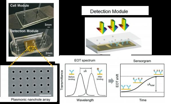 biosensor, microfluidics, extraordinary transmission phenomena, nanohole arrays