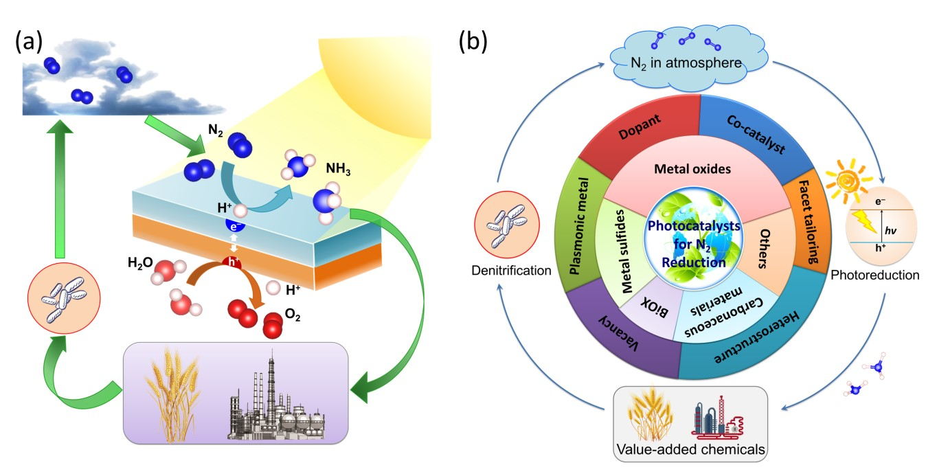 Solar driven nitrogen fixation to ammonia lighting the way toward a an overview of the n2 cycle and circulation of n2 in various forms b diagram of the state of the art milestone in the development of photocatalysts ccuart Image collections