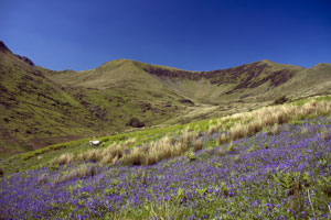 bluebells-snowdonia-national-park_shutterstock_300