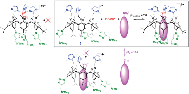 synergistic interaction of calixarene, heptylamine and Zn(II) for the complex formation