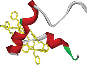 A cylindrical supramolecular complex (yellow) interacting with the central target region of the amyloid beta protein (green, white and red ribbon). Image credit: Xiaogang Qu