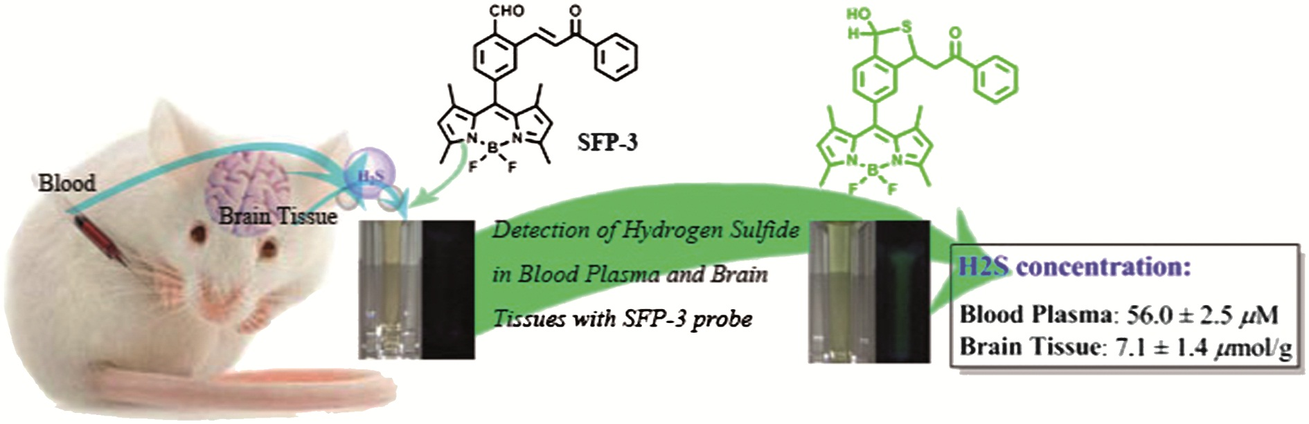 Monitoring levels of hydrogen sulfide - possible cause of ...