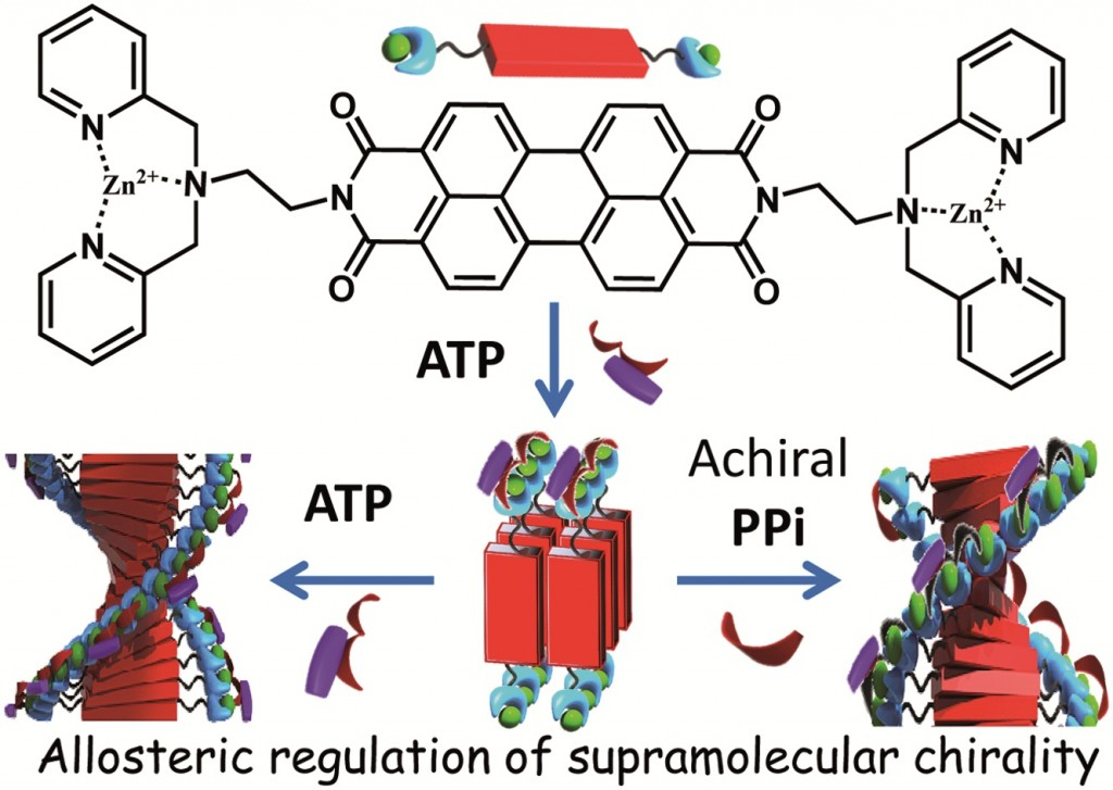 Ga Inducing Supramolecular Chirality From Afar With Allostery