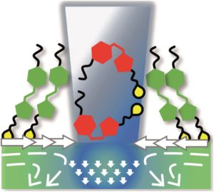 Unexpected monolayer-to-bilayer transition of arylazopyrazole surfactants facilitates superior photo-control of fluid interfaces and colloids