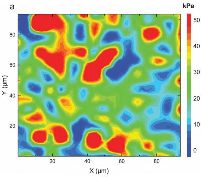 Young's modulus of the pituitary gland measured with AFM